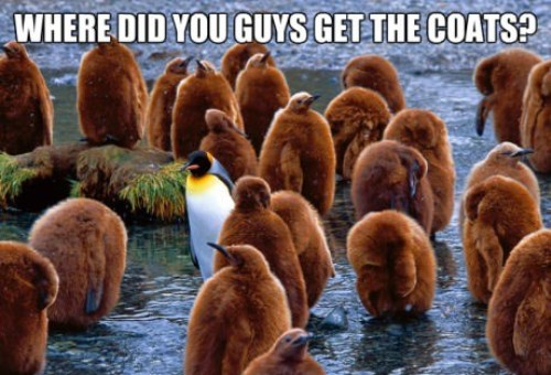 Name:  Penguins-In-Coats.jpg