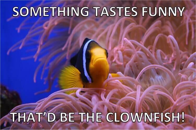 Name:  Clownfish-Fish-Puns.jpg Views: 111 Size:  47.0 KB