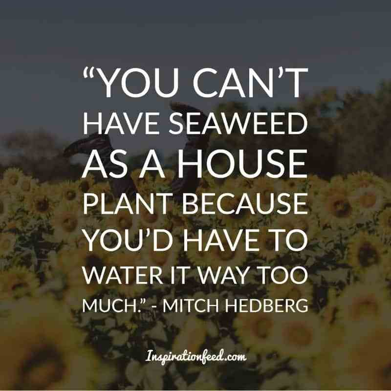 Name:  Mitch-Hedberg-Quotes-25.jpg Views: 55 Size:  35.0 KB