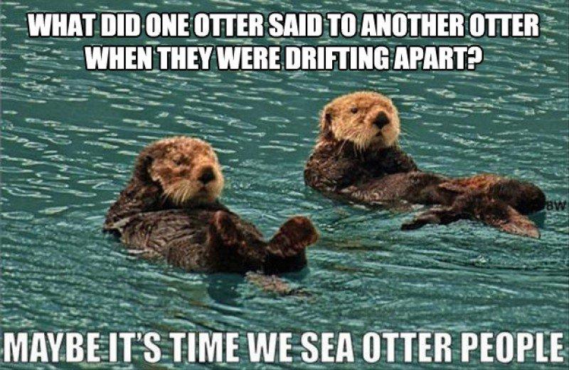 Name:  This-Funny-Sea-Otters-Joke0173681421471509383.JPG Views: 102 Size:  112.4 KB