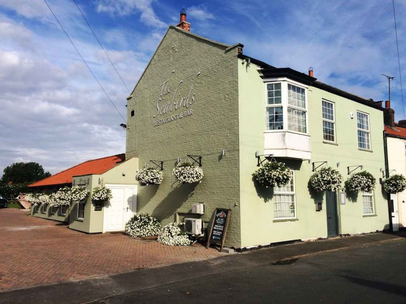 Name:  Seabirsd inn Flambrough..jpg