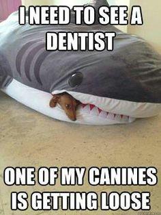 Name:  0277a78bd50db6b83b0a7da659636ac6--dental-jokes-dental-hygiene.jpg Views: 87 Size:  19.0 KB