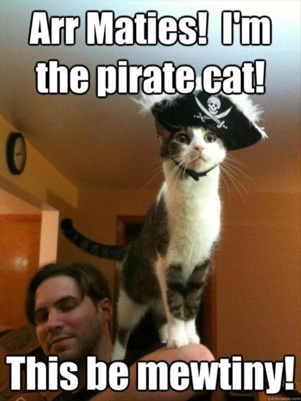 Name:  2-pirate-cat-funny-pictures1.jpg Views: 45 Size:  140.0 KB