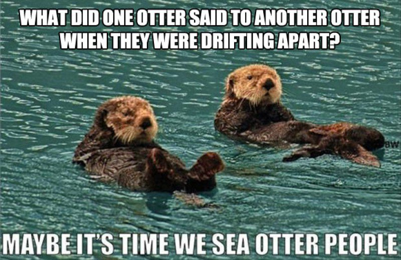 Name:  This-Funny-Sea-Otters-Joke0173681421471509383.JPG