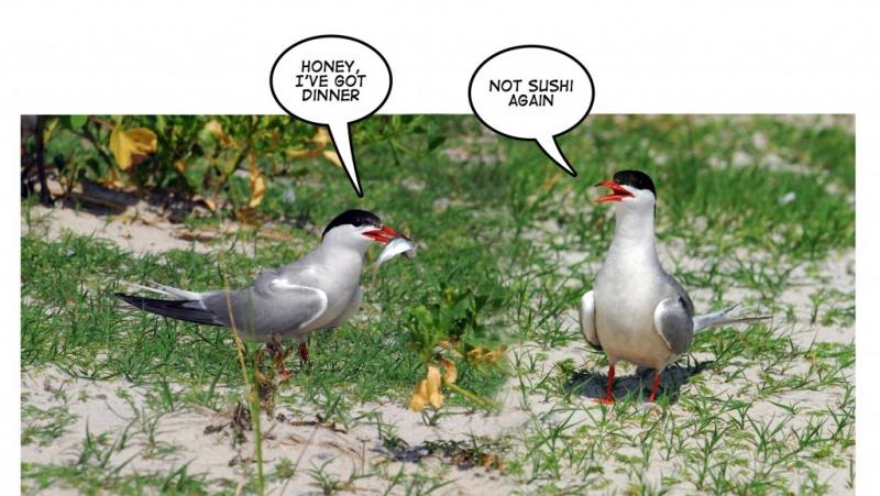 Name:  Beach-Humor3-1024x577.jpg Views: 66 Size:  156.8 KB