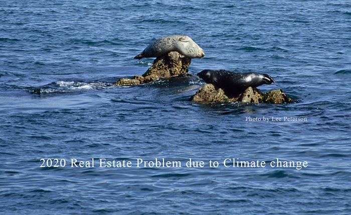 Name:  seal-on-rock-reef_815.jpg Views: 74 Size:  202.9 KB