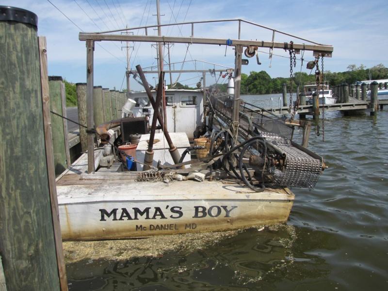 Name:  mamas-boy.jpg Views: 124 Size:  196.2 KB