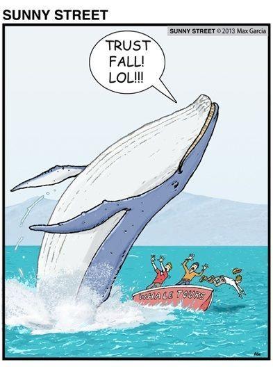 Name:  bf97f5085aff0144ddbf12ca1152101e--trust-me-whales.jpg Views: 184 Size:  37.3 KB