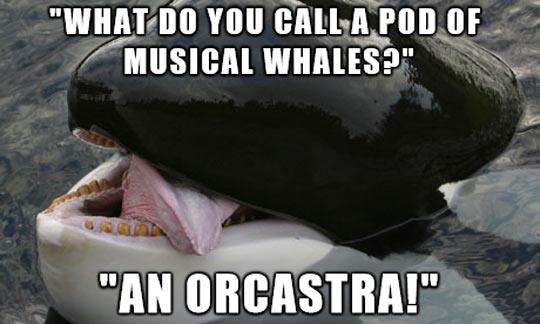 Name:  funny-orca-whale-jokes-ocean.jpg Views: 107 Size:  35.9 KB