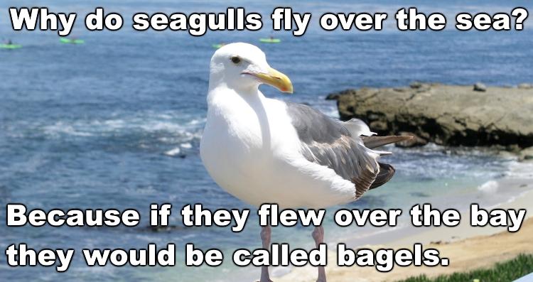 Name:  seagulls.jpg Views: 365 Size:  254.3 KB