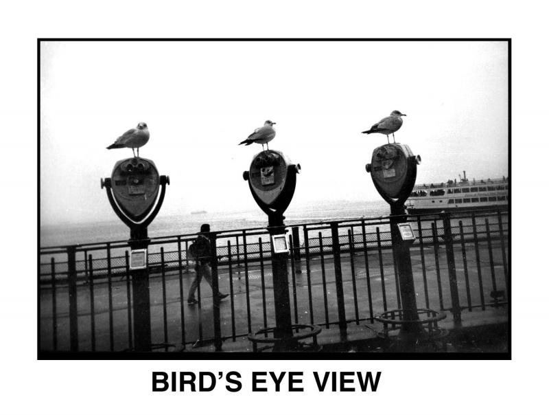 Name:  flo-birds.jpg Views: 62 Size:  118.7 KB