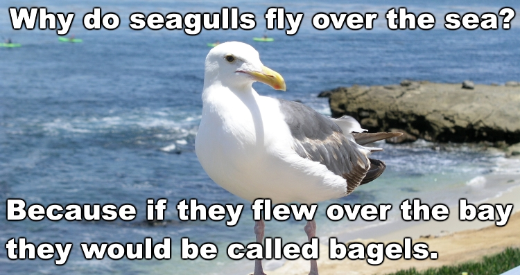 Name:  seagulls.jpg Views: 387 Size:  254.3 KB