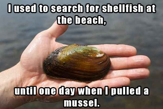 Name:  mollusc-and-sea-cucumber-joke.jpg Views: 172 Size:  40.4 KB