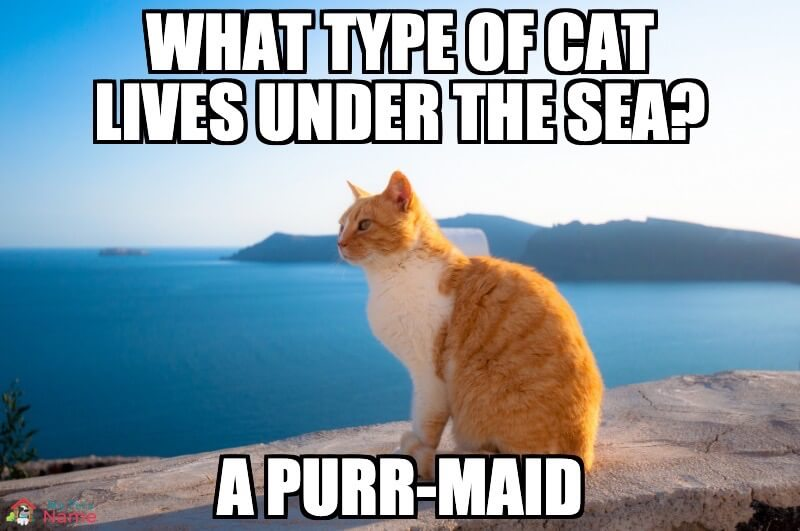 Name:  What-type-of-cat-lives-under-the-sea-A-purr-maid-.jpg Views: 93 Size:  57.5 KB