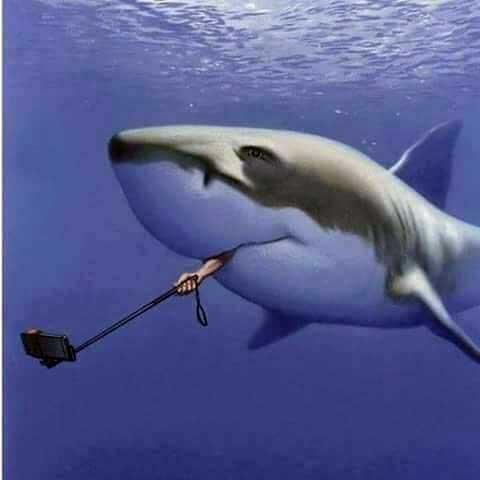 Name:  selfie-shark.jpg Views: 77 Size:  17.8 KB