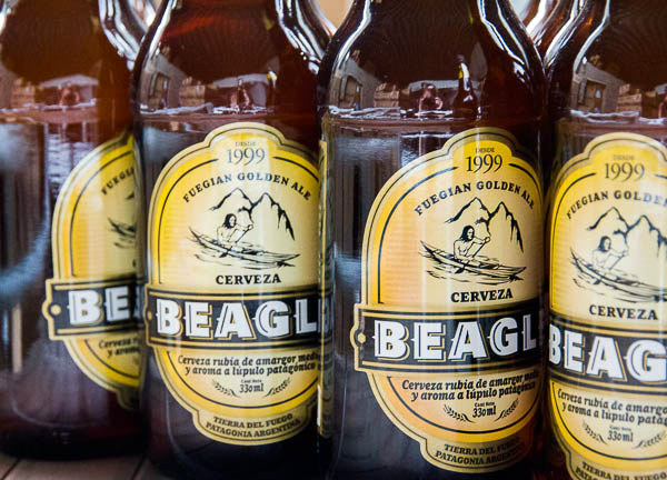 Name:  Beagle-Beer.jpg