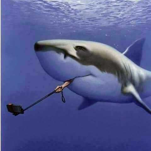 Name:  selfie-shark.jpg