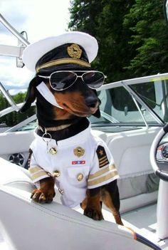 Name:  baddb5028eee94895d59c010e8e3e454--funny-dogs-funny-animals.jpg Views: 46 Size:  19.6 KB